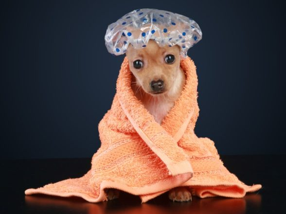 The Importance of the Shower Cap